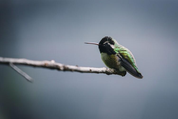 hummingbird proofs