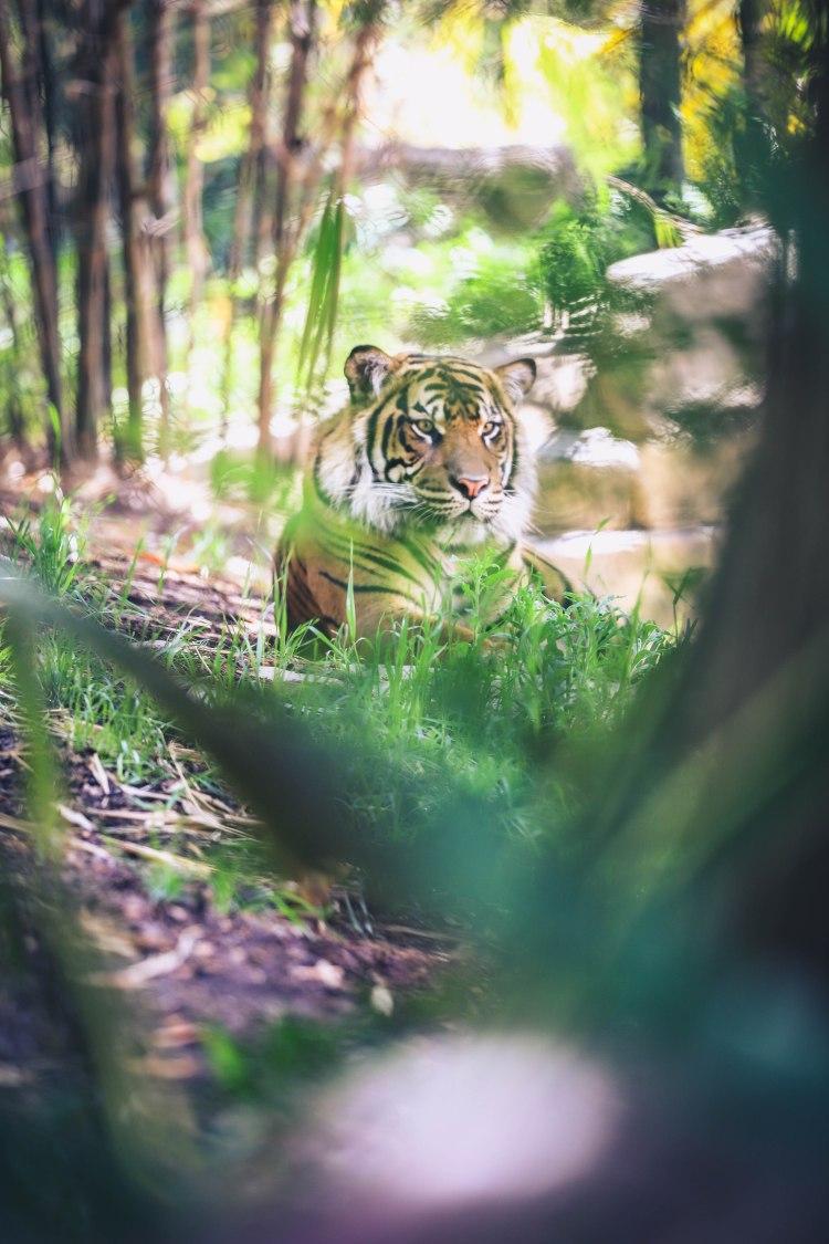 safari park (4 of 15)