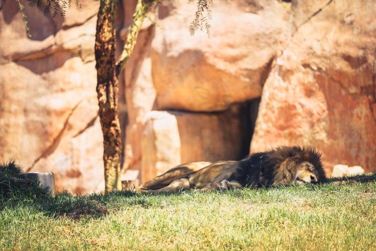 safari park (15 of 15)