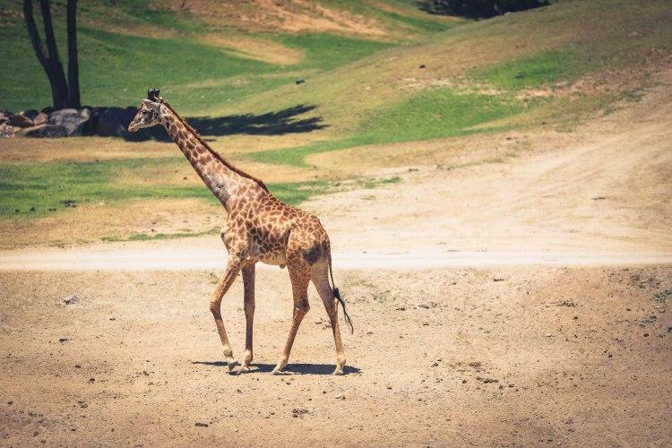 safari park (12 of 15)