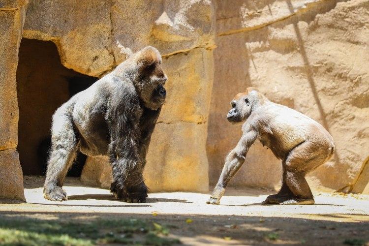 safari park (11 of 15)