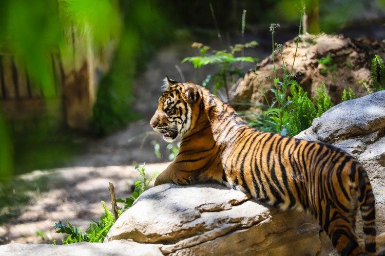 safari park (6 of 15)